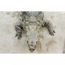 3D декоративна настилка за баня 1-142728808